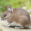 Японские ученые оживили мозг мыши через месяц после ее смерти