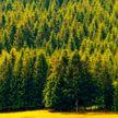 Девять дней блуждала по лесу: пропавшую под Минском девушку нашли