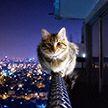 Чтобы спасти своего кота, мужчина прошёл по карнизу шестого этажа (Видео)