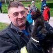 Минские спасатели освободили котят, застрявших под капотом