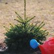 Хочешь посадить дерево? Звони! В Беларуси стартовала неделя леса