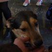 «Дорога домой»: бездомные кошки и собаки обрели хозяев