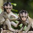 Трудности материнства: обезьяна попыталась искупать своего непослушного детеныша (ВИДЕО)