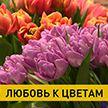 Тюльпаны, розы и мимозы. Как белорусы выращивают цветы и какие букеты сейчас в тренде?
