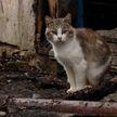 Кот раз за разом возвращается к дому, где сгорел его хозяин