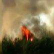 Пожар в Наровлянском районе: более 300 гектаров леса выгорело за сутки