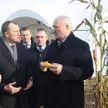 Уборка кукурузы, контроль за ценами, производство сыра. Подробности поездки Президента в Слуцкий район