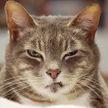 Кот приревновал кошку к хозяину и устроил сцену ревности обоим