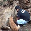 Видеофакт: собака спасла детёнышей из-под завалов обрушившего дома