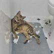 10 фотографий, которые доказывают, что наглость котов не имеет границ