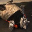 7 забавных случаев, когда коты сломались и рассмешили всех