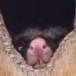 Фотогеничность? Нет, не слышали. 7 неудачных снимков животных, которые рассмешат вас до слез