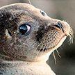 Три ленивых, но хитрых тюленя отправились в путешествие на корабле (ВИДЕО)