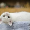 Кошка упала с подоконника второго этажа и напугала всех (ВИДЕО)