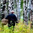 В лесах Беларуси продолжают пропадать грибники. Как не заблудиться?