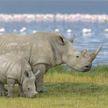 Ученые придумали, как подделать рог носорога