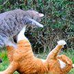 """«Вы в """"Танцах""""»: эпичная драка уличных котов рассмешила пользователей сети (ВИДЕО)"""