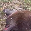 На границе с Латвией погиб лось