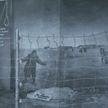 Белорусско-немецкая выставка, посвящённая истории лагеря Тростенец, открылась в Гомеле