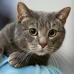 За убийство кошки жителю Вилейки назначили год исправительных работ