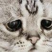 Кошку-безбилетницу за лапки выдворили из поезда
