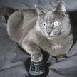 «Смешно и жалко одновременно»: кот набросился на птичку в телевизоре и рассмешил сеть (ВИДЕО)