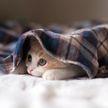 Освежитель воздуха оказался опасным для кошек