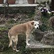 Самый верный друг: в Италии собака 10 лет провела у могилы хозяина и умерла