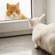 Очень медленно! Кот выбрал необычную тактику нападения на подругу и удивил всех