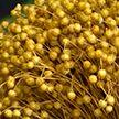 Дубровенский льнозавод приступил к переработке нового урожая