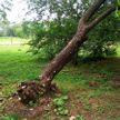 Сильный ветер повредил здания и повалил деревья на Могилевщине