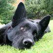 Собака принесла в дом самого милого «клеща». Посмотрите на него! (ВИДЕО)