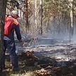 Запрет на посещение лесов ввели в 78 районах Беларуси
