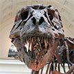В Испании внутри фигуры динозавра нашли мертвое тело: мужчина залез туда за телефоном и погиб