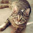 Кот обнял руку хозяина, не хотел отпускать его на работу и удивил всех (ВИДЕО)