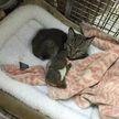 Мужчина спас котенка, но позже оказалось, что это вовсе не милый пушистик