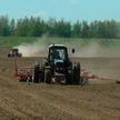 Посевная в Могилевской области завершается: осталась кукуруза на силос, а затем – просо и гречиха