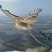 Птица столкнулась с лобовым стеклом самолета (ВИДЕО)