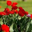 Тепло, но с дождями: прогноз погоды в Беларуси на выходные 15 и 16 мая