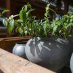 Льготное кредитование агроусадеб предлагают продлить до 2030 года