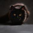 В Украине кот стал причиной смерти четырехмесячного ребенка