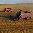 Урожай-2020: погода способствует уборке зерновых