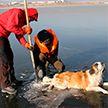 Вмёрзшую в лёд собаку спасли в Забайкалье
