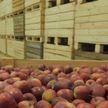 Инвестор построит в Барановичах большое хранилище для фруктов