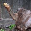 100-летняя гигантская черепаха Диего вернулась в дикую природу (ВИДЕО)