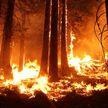Запрет на посещение лесов ввели в 39 районах Беларуси