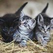 Котята в деревне пьют молоко необычным способом! Такого вы еще не видели! Все в восторге! (ВИДЕО)