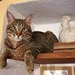 Кошки спасли супругов от оползня в Италии