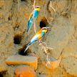Акция «Живая весна»: белорусов приглашают фотографировать весенних птиц и вместе составить карту миграции