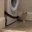 Круговорот котов. Посмотрите, как котята охотятся друг на друга, это очень смешно! (ВИДЕО)